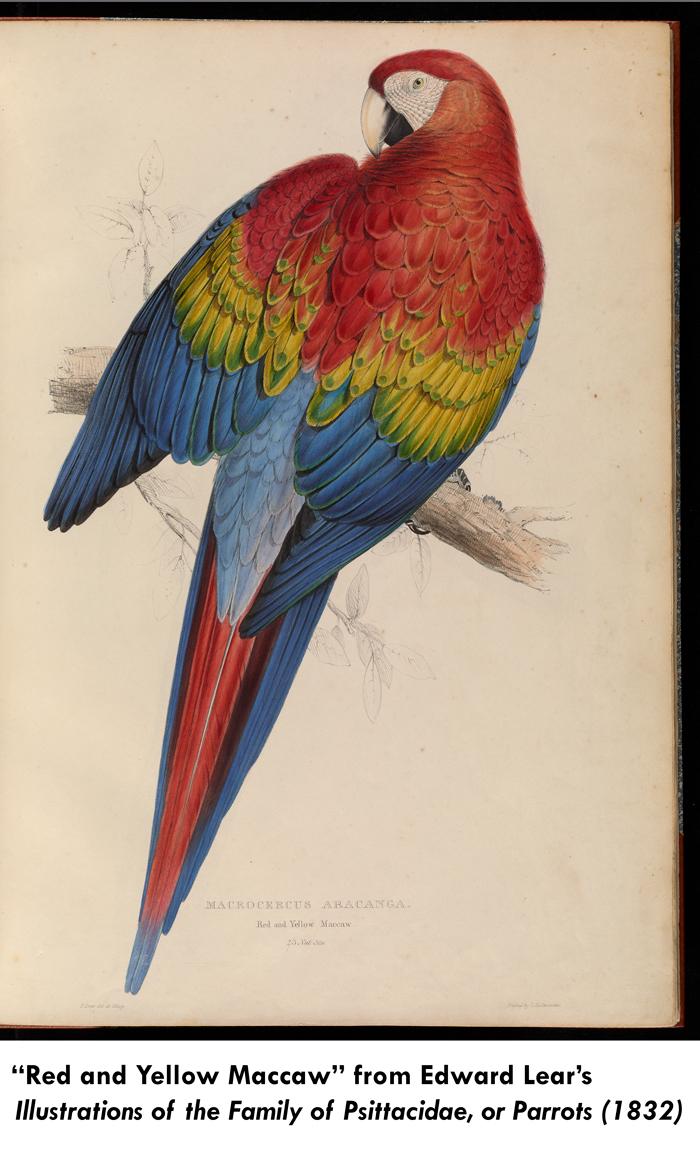 lear parrot